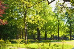 Green lawn in city park under sunny light, royalty free stock photography