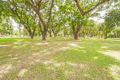 Green lawn in city park Royalty Free Stock Images