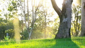 Green lawn in city park under sunny light stock video footage