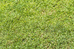 Green lawn Stock Images