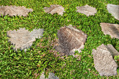 Green lawn closeup  which attached rocks on the floor Royalty Free Stock Photo