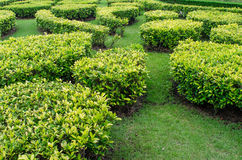 Green lawn in a colorful landscaped formal garden. Royalty Free Stock Images