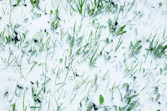 Green lawn covered with snow Royalty Free Stock Image
