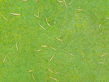 Green lawn and dried leaves Royalty Free Stock Images