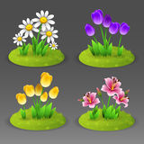 Green lawn with flowers Royalty Free Stock Images