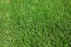 Green lawn Stock Image