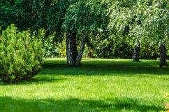 Green lawn garden back yard. Birch trees on the back yard garden ideal green lawn royalty free stock photos