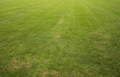 Green lawn. Green grass lawn as background Royalty Free Stock Photos