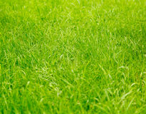 Green lawn grass, background Stock Images