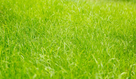 Green lawn grass, background Stock Photo