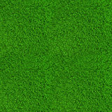 Green lawn grass background texture high Royalty Free Stock Image
