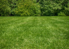 Green lawn. Green grass and a forest nearby Stock Image