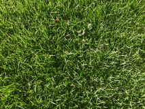 Green Lawn Royalty Free Stock Photography