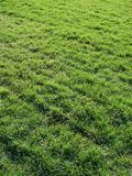 Green lawn of a grass a natural background stock photos