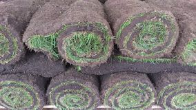 Green Lawn grass roll twisted into a roll. Gardening. Landscaping. Green grass twisted into a roll for packing. UK royalty free stock images