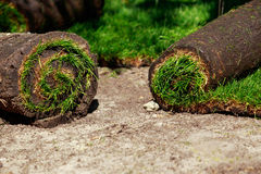 Green lawn grass in rolls. The stacking of roll green lawn grass Stock Photography