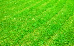 Green lawn Stock Photography