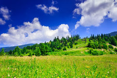 Green lawn with hill and trees under the summer sky. Green lawn with mountain herbs and a small hill with trees under a beautiful summer sky with clouds Royalty Free Stock Image