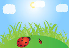 Green lawn with ladybirds Stock Photos