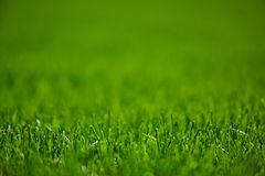 Green lawn mowed grass. Green lawn grass clippings, well maintained stock photo