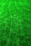 Green Lawn with Mowing Lines Growth Royalty Free Stock Images