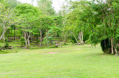 Green lawn and natural many trees in garden Stock Photo