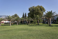 Green lawn with palm trees Royalty Free Stock Photo