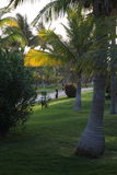 Green lawn with Palm trees Royalty Free Stock Photos