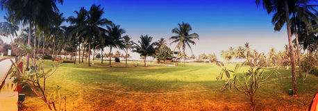 Green lawn and palm trees Royalty Free Stock Photography