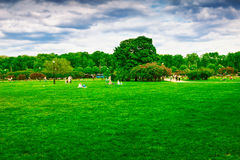 Green lawn in the park Royalty Free Stock Photo