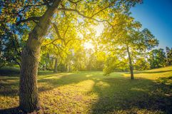 Green lawn in a park in sunlight. fisheye distortion lens stock image