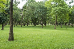 Green lawn in park Royalty Free Stock Photography