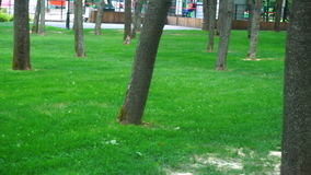 Green lawn in the park with trees stock footage