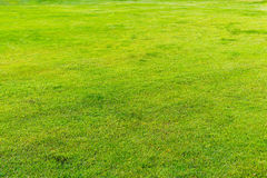 Green lawn pattern, Green grass nature background. Green lawn pattern, Green grass natural background Royalty Free Stock Image
