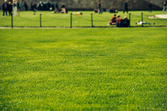 Green lawn with people on background Stock Images