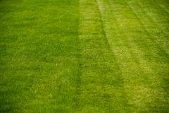Green lawn in perspective Stock Photography