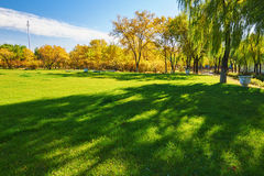 The green lawn Stock Image