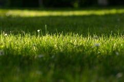 Green lawn Royalty Free Stock Photo