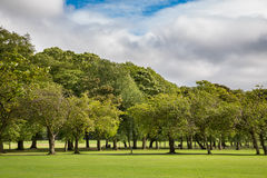 Green lawn plum trees at Meadows park, Edinburgh Royalty Free Stock Images