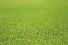 Green lawn of the public park. Stock Photo