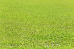 Green lawn of the public park. Royalty Free Stock Images