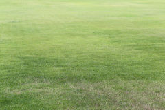 Green lawn of the public park. Stock Photography