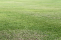 Green lawn of the public park. Royalty Free Stock Photography