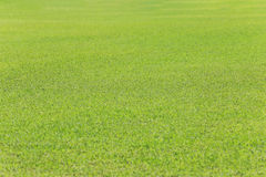 Green lawn of the public park. Royalty Free Stock Image