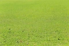 Green lawn of the public park. Stock Photos