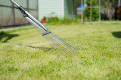 On the green lawn rake collect grass clippings Stock Photos