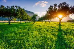 Green lawn and rays breaking through trees at sunset. Stock Photography