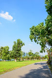 The green lawn and road stock photography