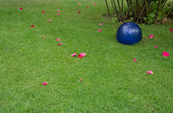 Green lawn with rose petals Stock Photo