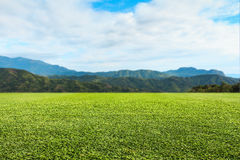 Free Green Lawn Sky And Mountain. Royalty Free Stock Images - 86497729
